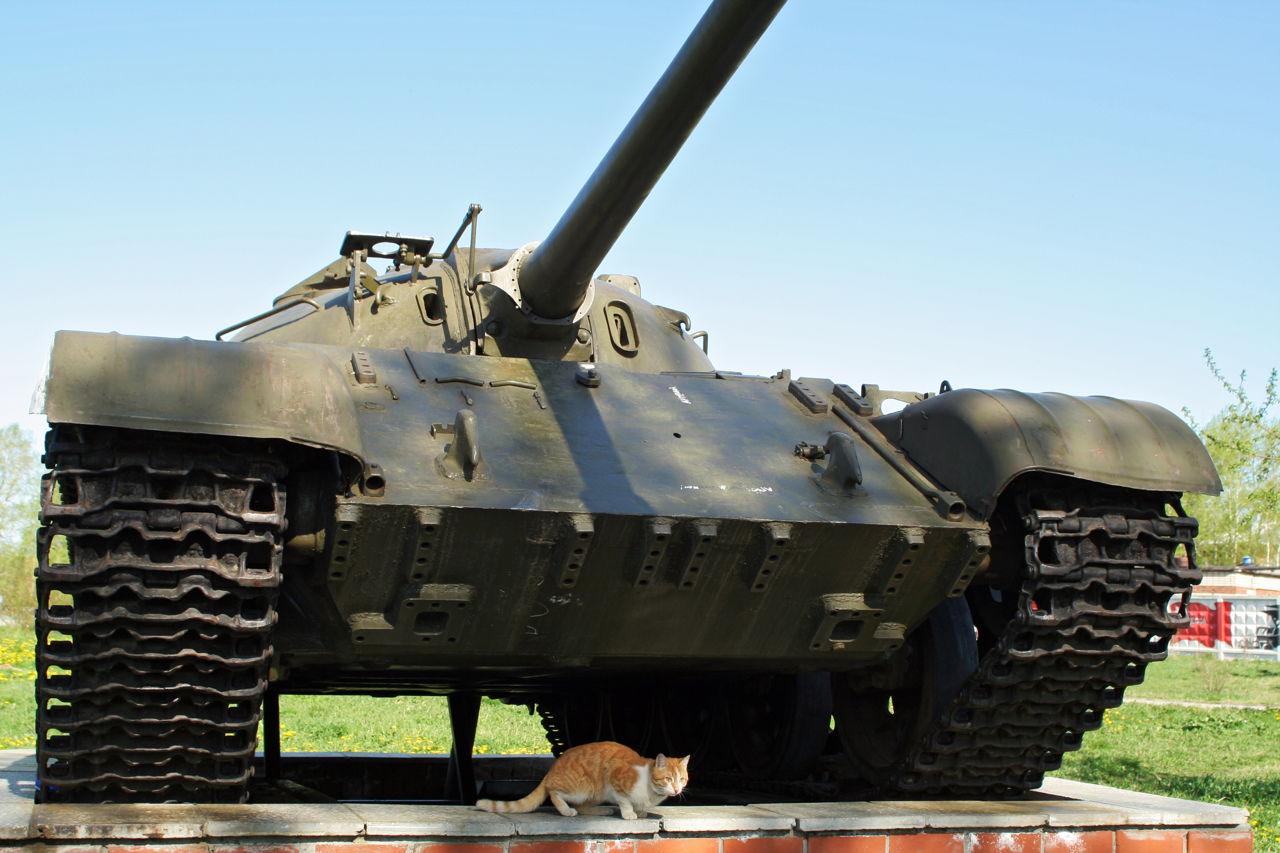 Ruski utjerivači dugova zapljenjuju – mačke
