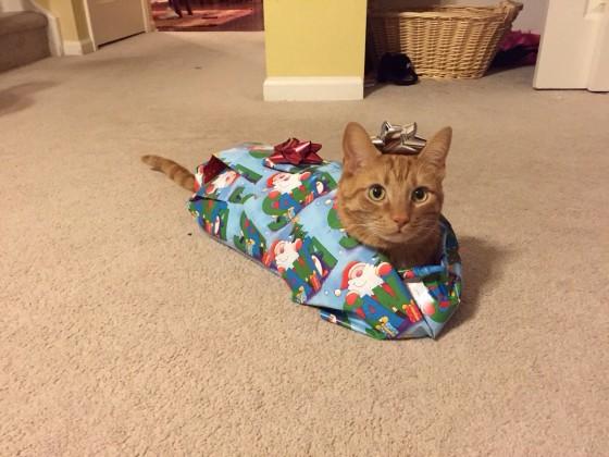 Poklon mačka