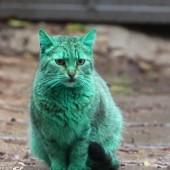 Zelena mačka