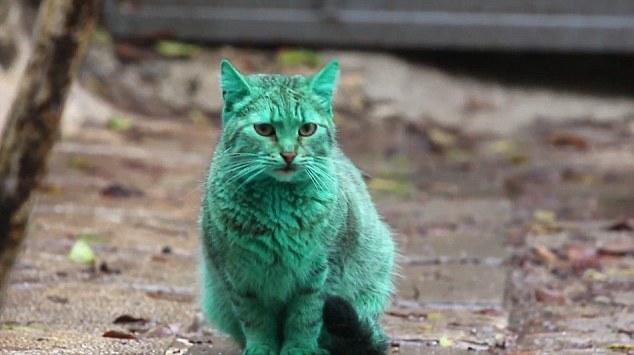 Zelena mačka? Da, u Bugarskoj!