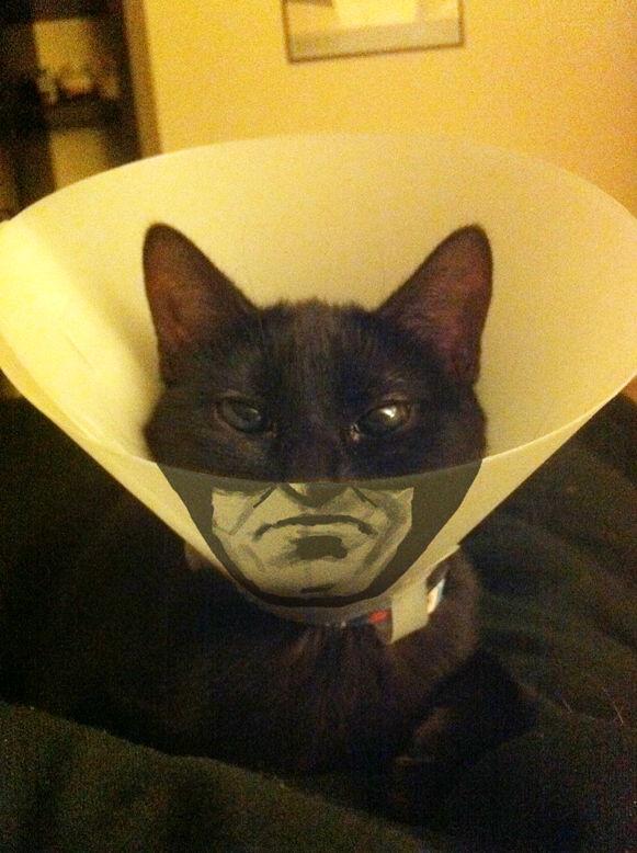 Catman okovratnik