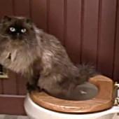 Mačak jinx