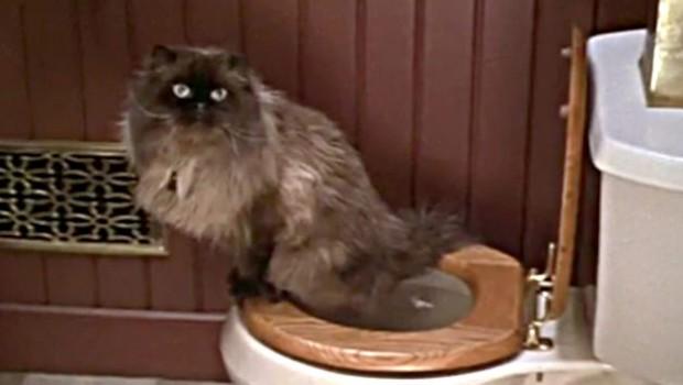 Trebate li mačku naučiti da koristi vaš toalet?