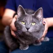 Mačka i reakcija na emocije
