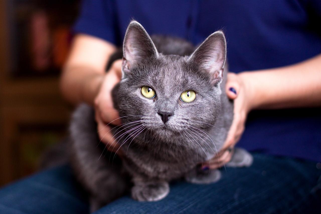 Mačke (ipak) prate naše reakcije