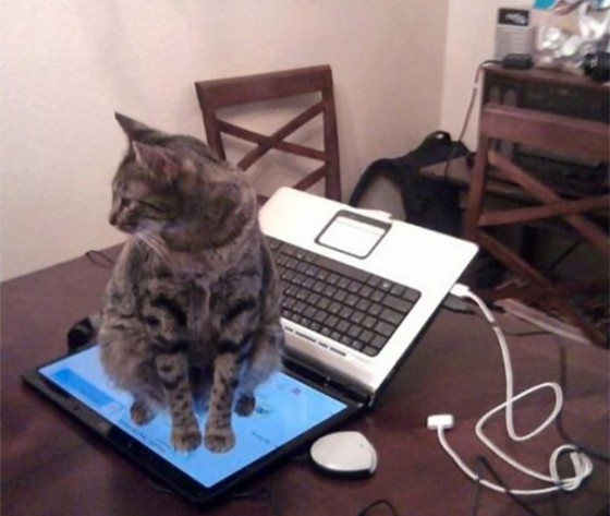 Mačka na laptopu