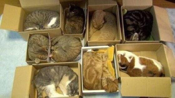 Mačke u kutijama