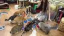 Muzej mačaka u Singapuru