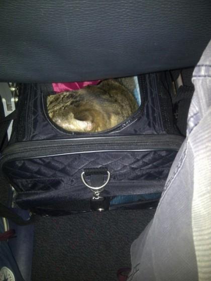 Rubens u avionu