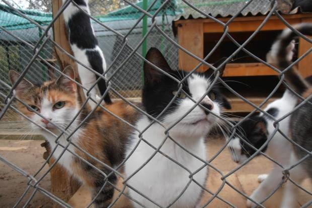 Sklonište za napuštene i ozljeđene mačke treba našu pomoć!