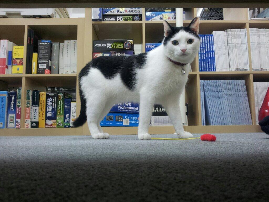 Ured sa mačkama pruža opuštenu radnu atmosferu bez stresa