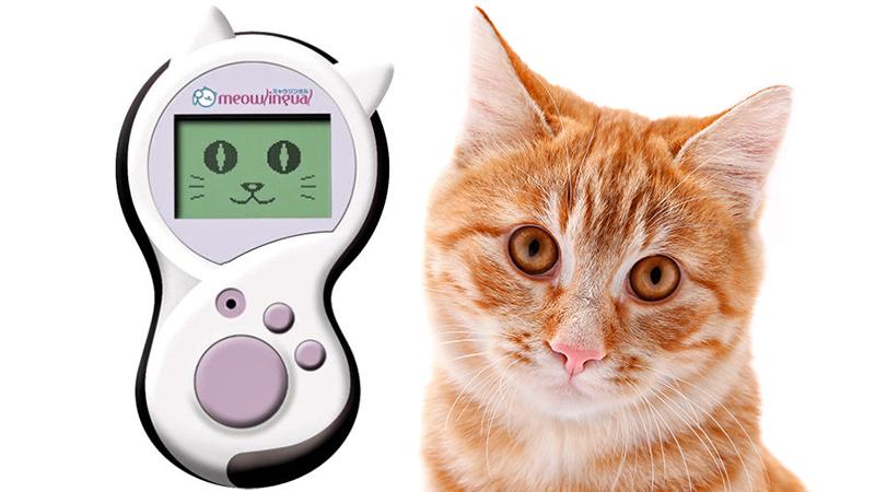 Konačno ćemo razumjeti mačke pomoću – Meowlingual uređaja