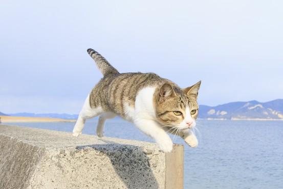 Knjiga letećih mačaka