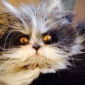Mačak Atchoum