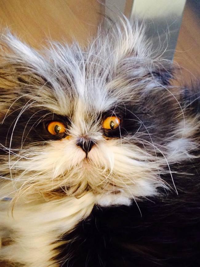 Atchoum je mačak sa čupavim problemom