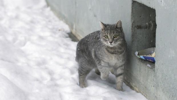 I to se događa – starac u zatvoru jer hrani mačke lutalice