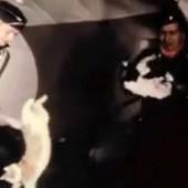 Mačke u bestežinskom stanju