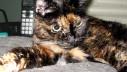 Najstarija mačka na svijetu je…
