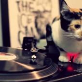 Mačka i glazba