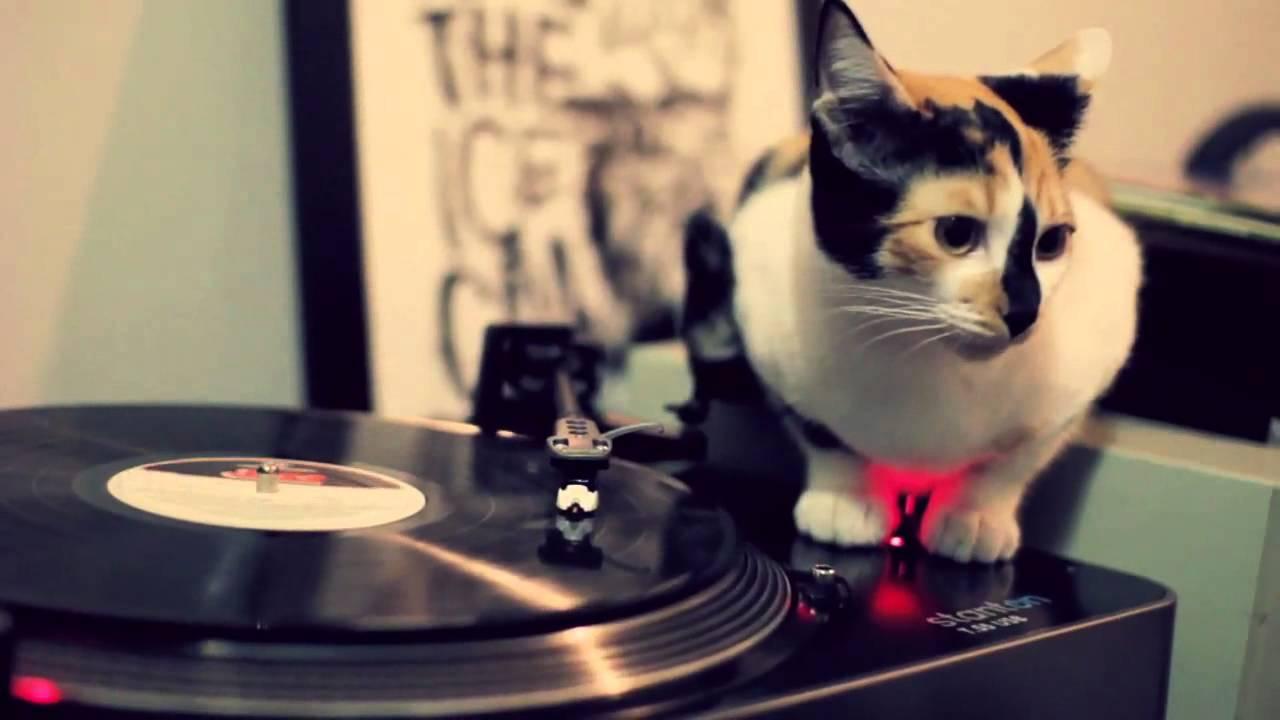 Bach za mačke – glazba koja imitira mačje predenje i sisanje