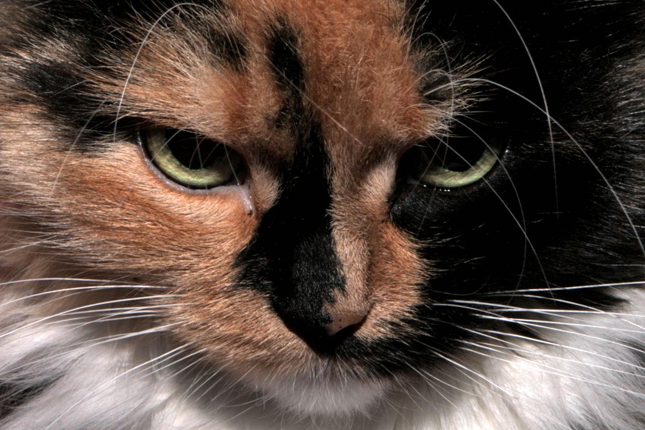 Koliko dobro mačke pamte?