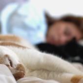 Palijativna skrb za mačke