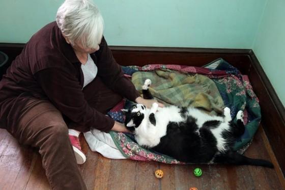 Sprinkles - mačka od 15 kilograma