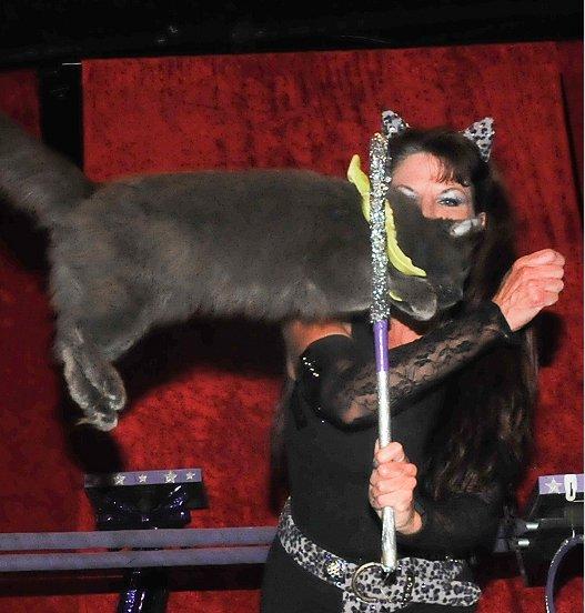 The Acro – Cats, nevjerojatni mačji cirkus