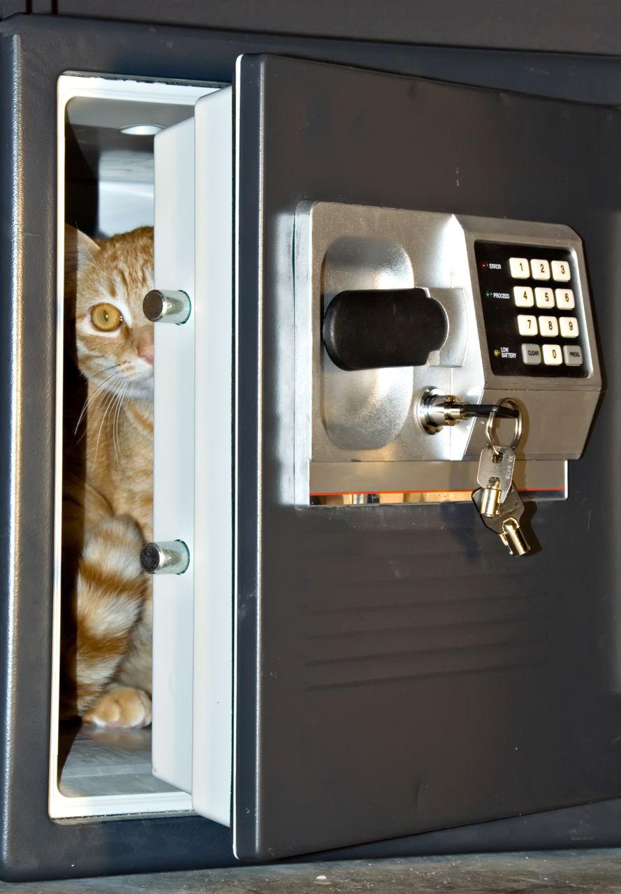 Mačje tajne