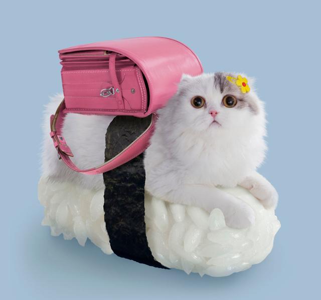 Sushi mačka