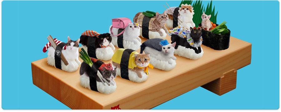 Nekozushi – apsurdna kombinacija mačaka i sushija