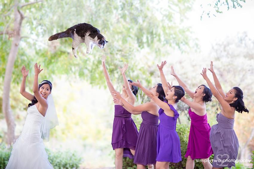 Brides Throwing Cats – hit na internetu