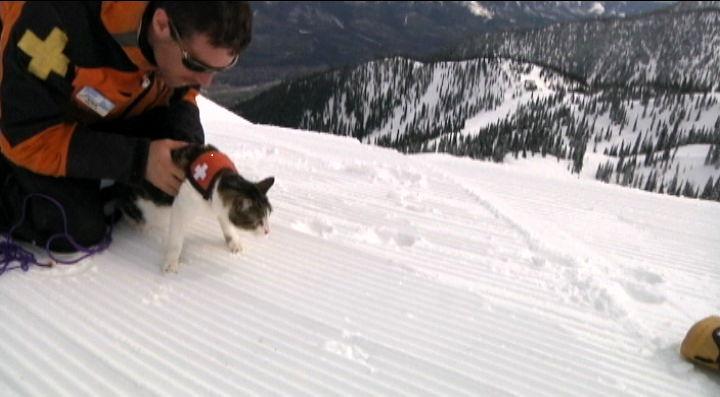 Kanadska udruga za treniranje mačaka za spašavanje