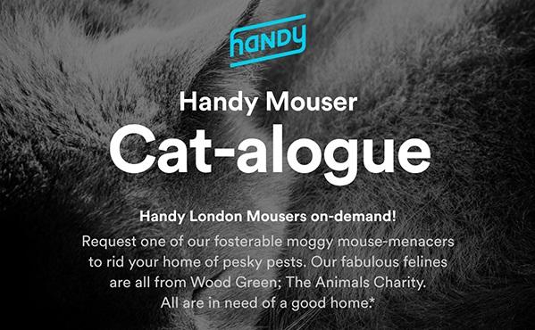 Novost u Londonu – unajmite mačku, eko istrebljivačicu miševa