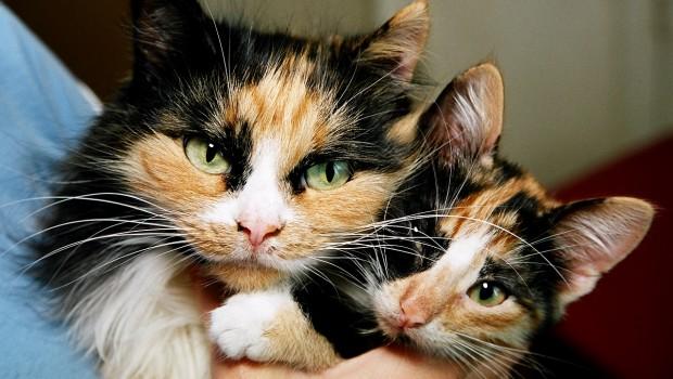 Imena za mačke
