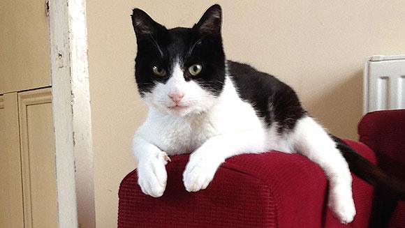 Mačak Merlin prede najglasnije na svijetu