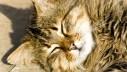 Sunčane opekline kod mačaka