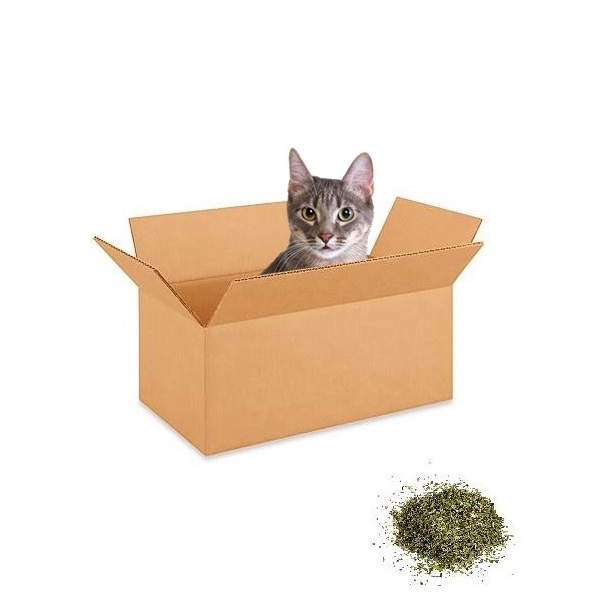 Idealan poklon za vašu mačku je iznimno jednostavan