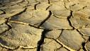 Jesu li suše uzrok većoj mačjoj plodnosti?