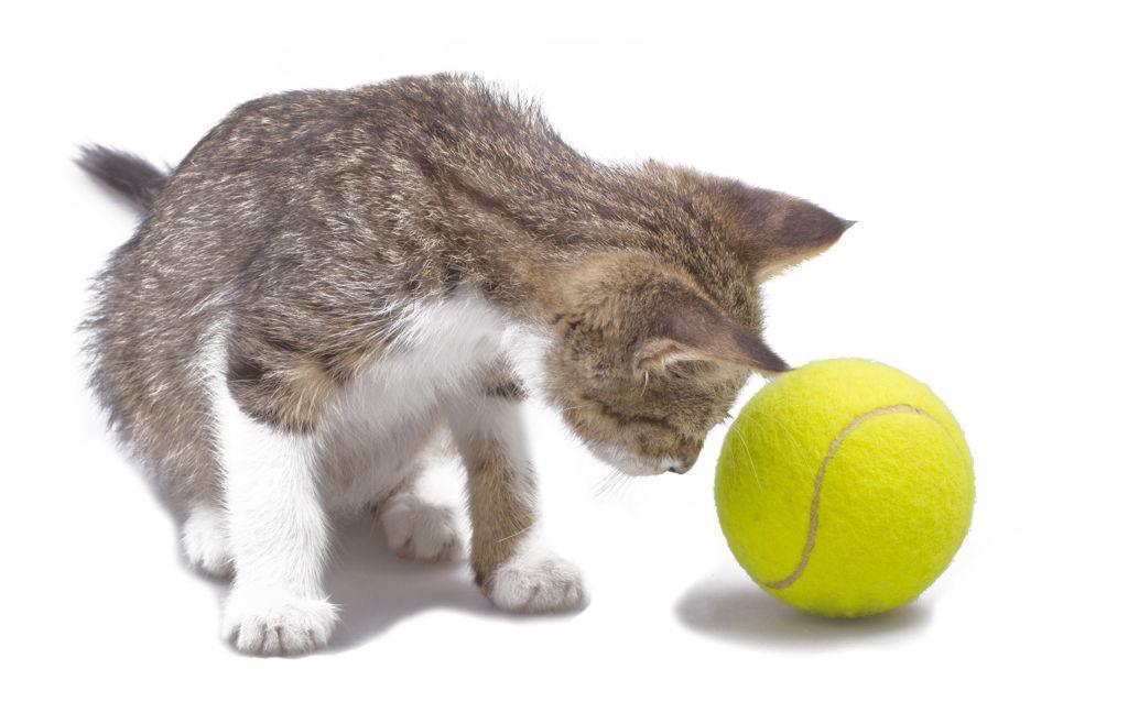 Pet najčešćih simptoma bolesti kod mačaka