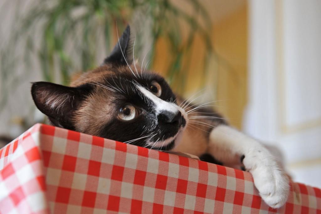 Mačka na stolu