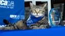 Hrabra mačka Tara dobila prestižnu nagradu 'Hero Dog'