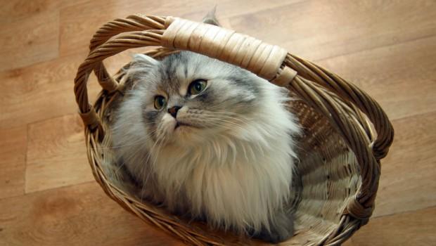 Tajne koje trebate znati prije nego nabavite mačku