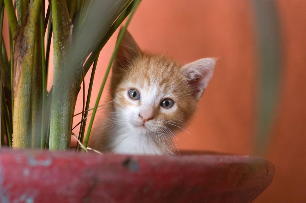Mačka u vazi