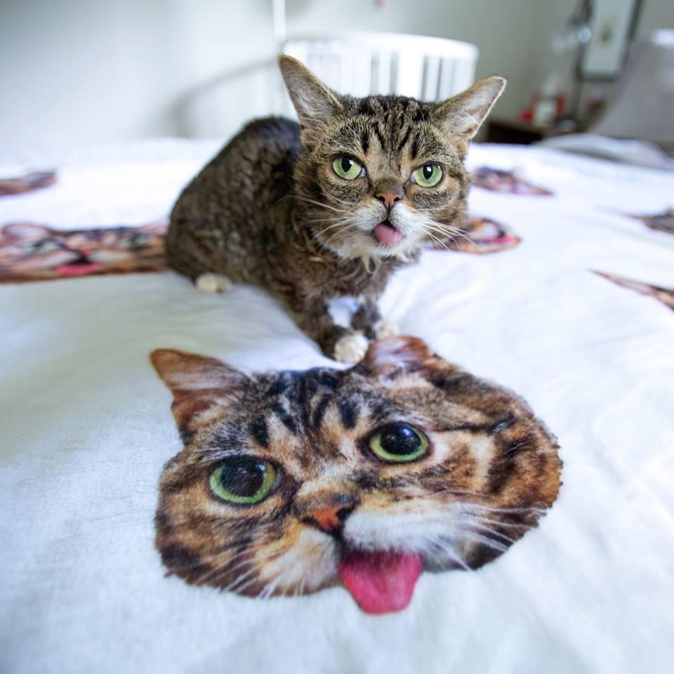 Muzej otvara izložbu posvećenu čuvenim mačkama interneta