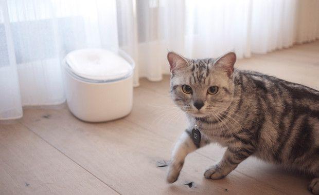 Pura – vodena fontana za mačke