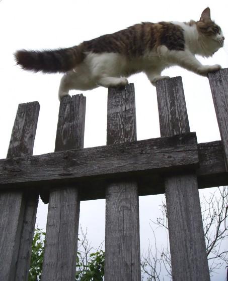 Mačja ravnoteža