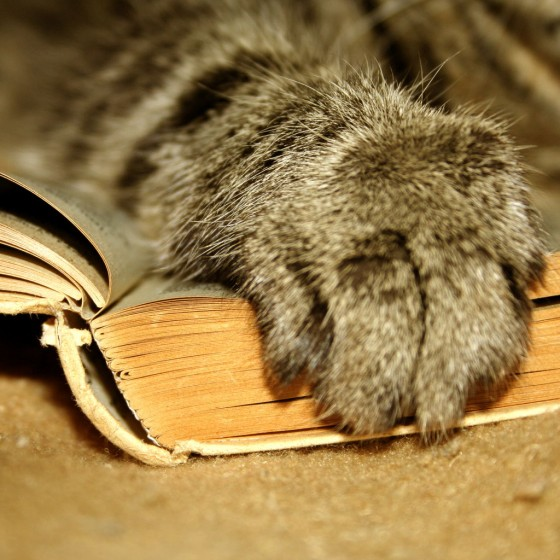 Mačja šapa