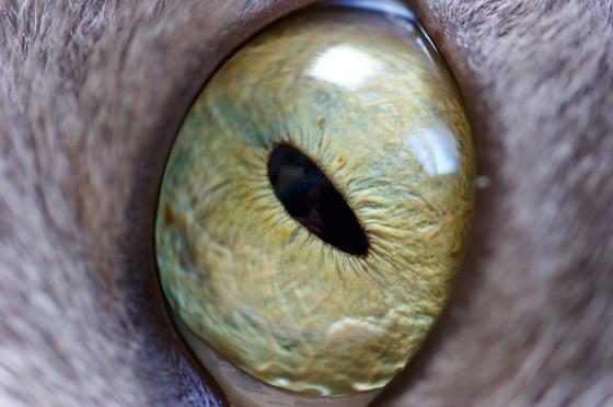 Mačje oko