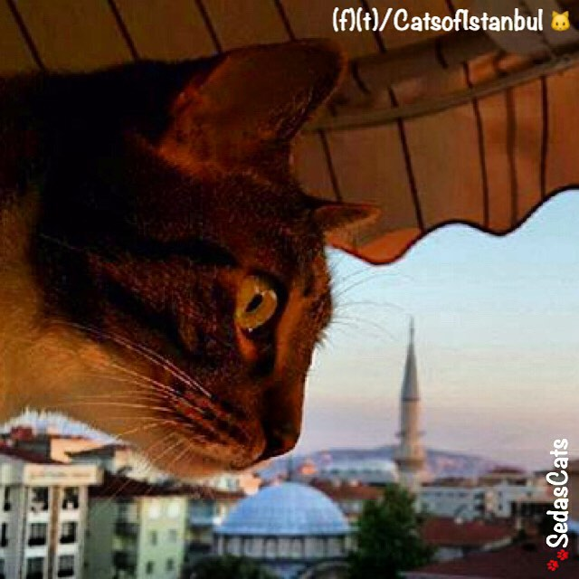 Cats of Istanbul 2